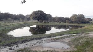 Laguna pequeña Dehesa Boyal